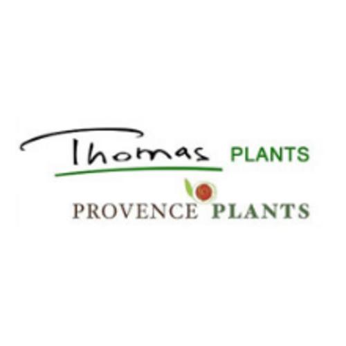 Thomas Plants